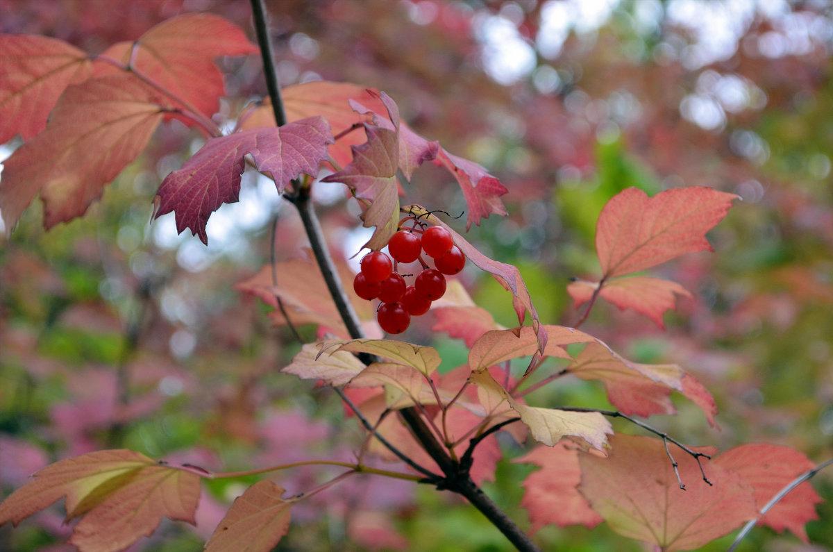 Осень в Сибири - Тарун Дас