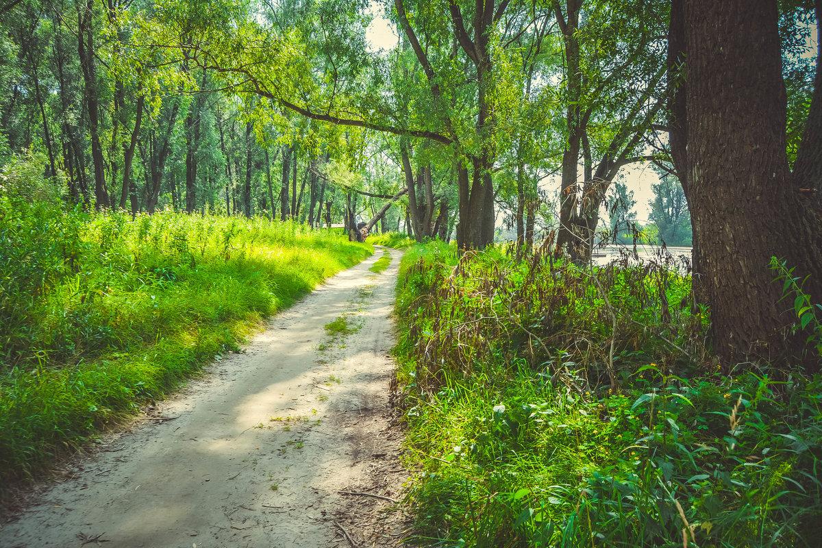 лесные тропы - Света Кондрашова