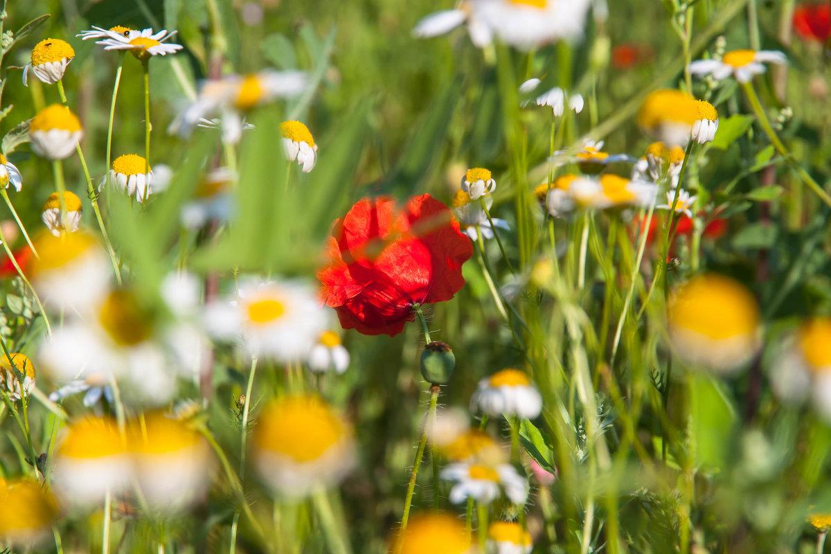 цветы - Тамара Гераськова