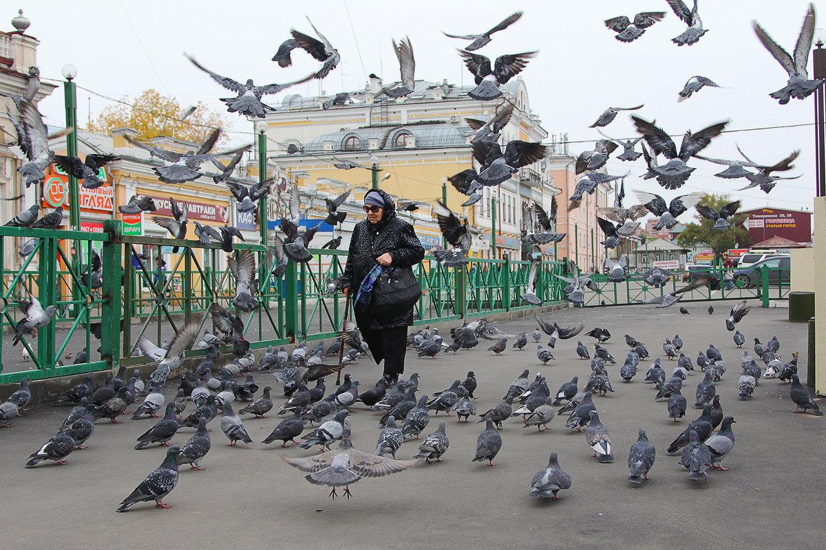 Стая голубей - Апёнова Нина