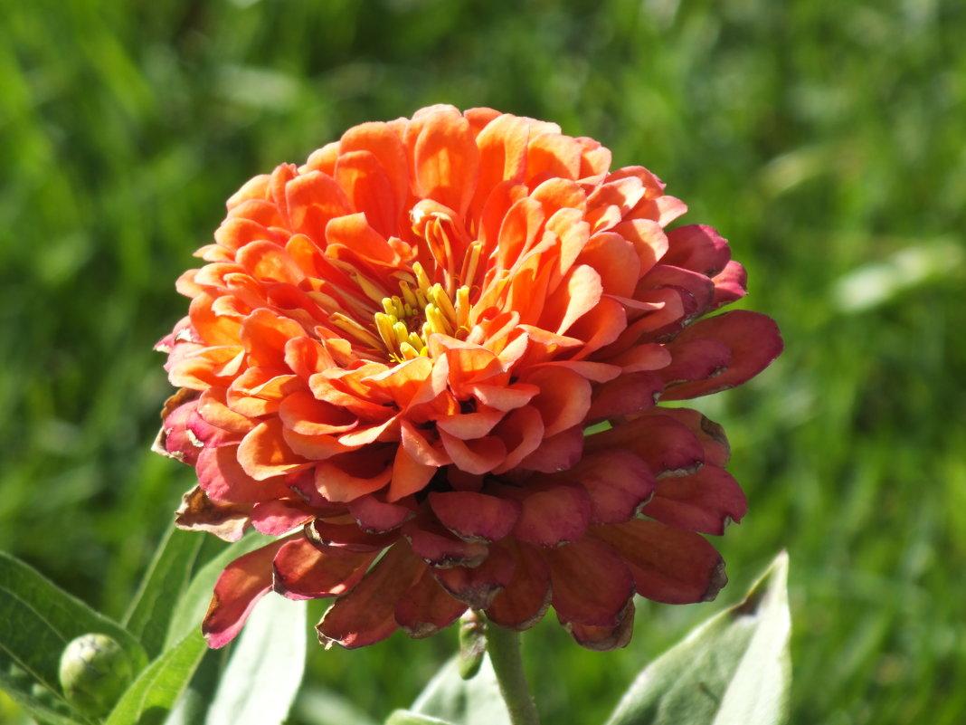 Цветок сентября - prokyl