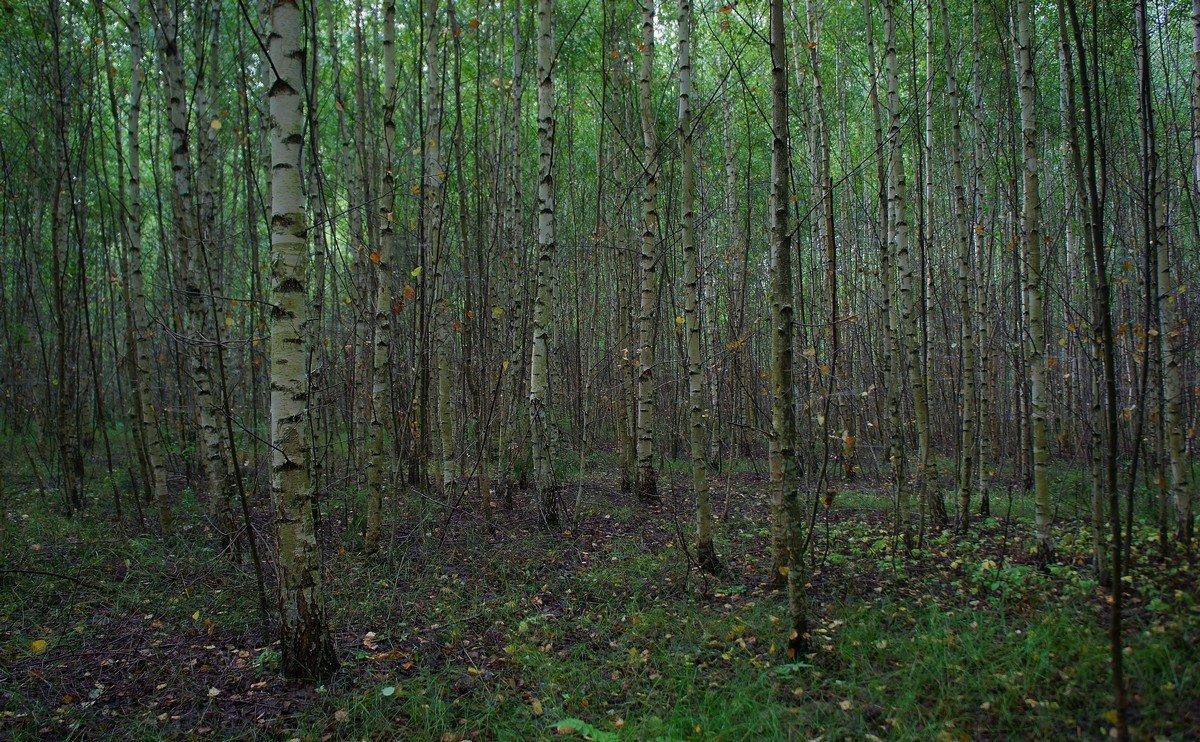 Заколдованный лес... - марк
