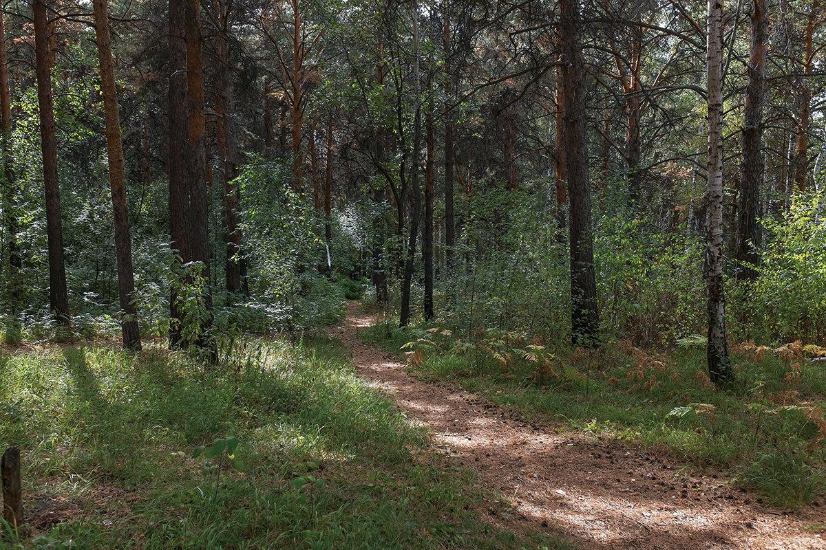 В лесу. - Валерий Молоток