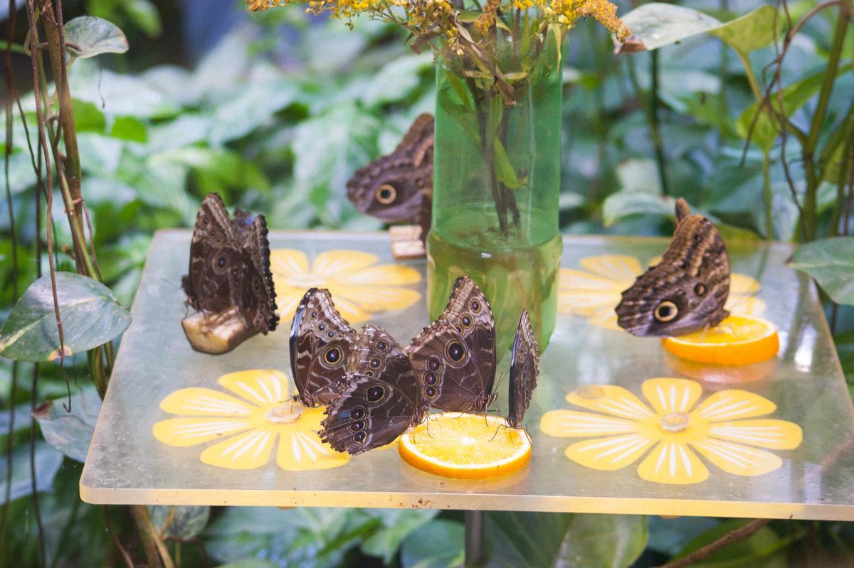 бабочки - EDO Бабурин