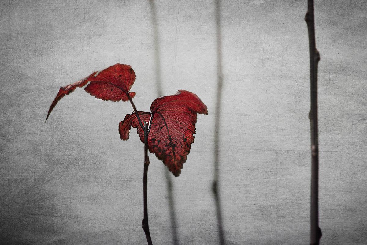 Осень - Ирина Елагина