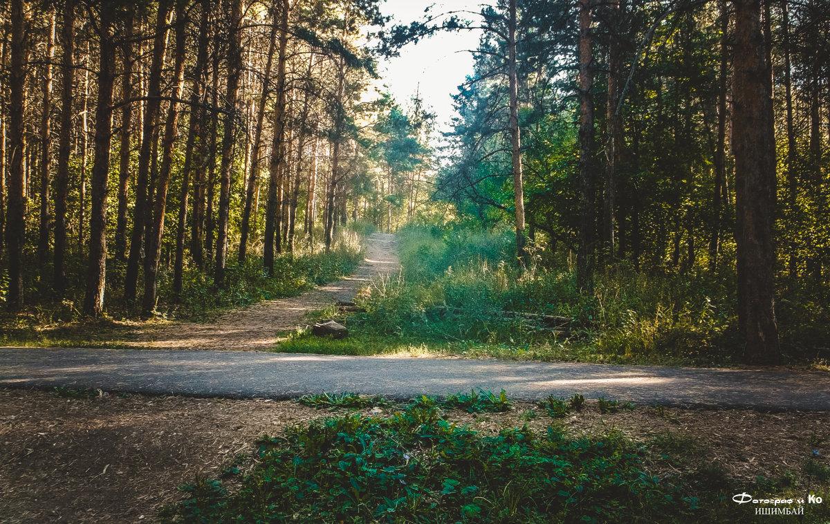 В лесу - Вячеслав Баширов
