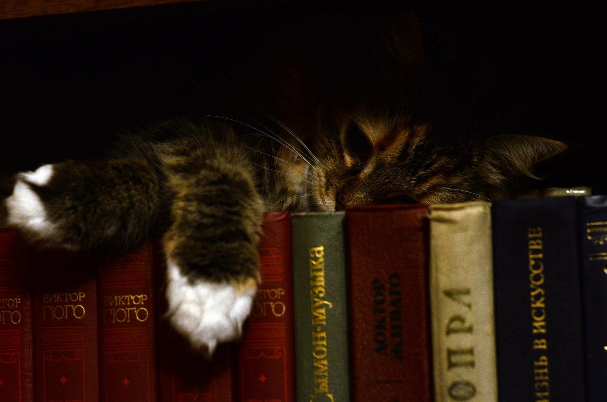 Кошка и книги - Мария Родионова