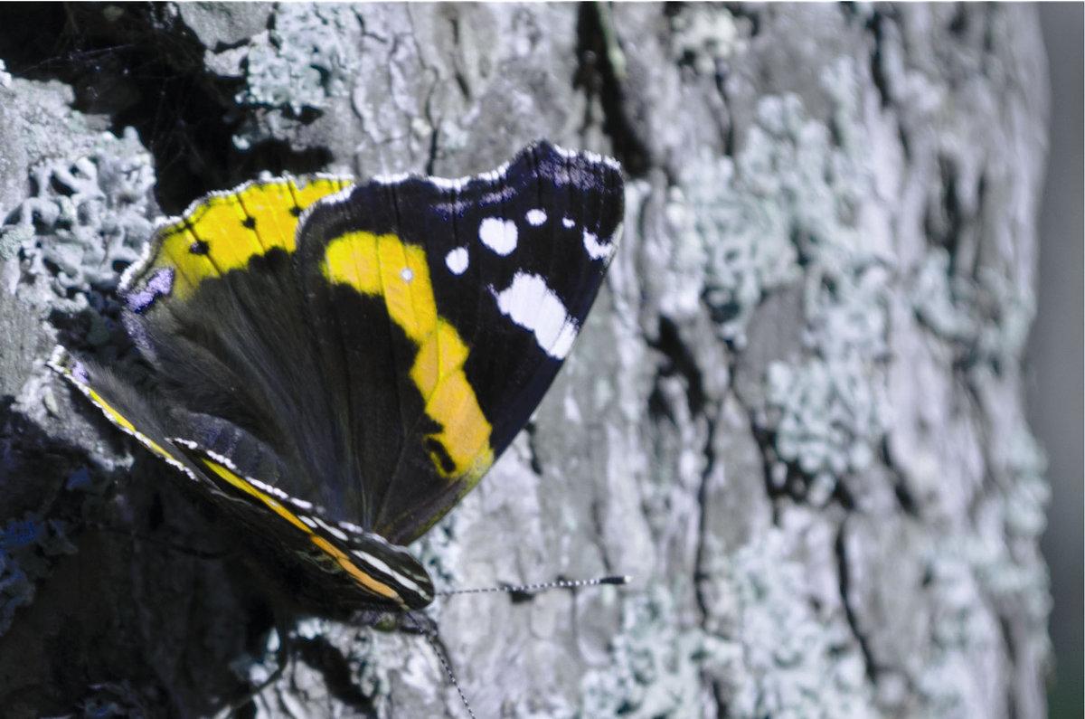 Бабочка - Анна Бойко