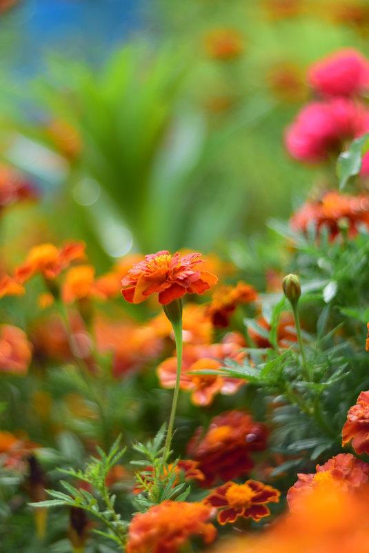 Цветы - Иван Птушкин