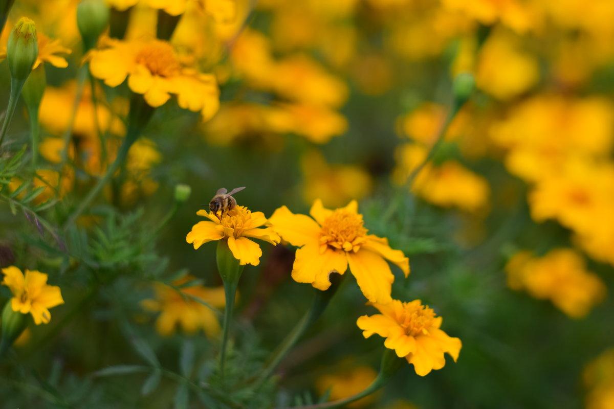 Пчелка - Иван Птушкин