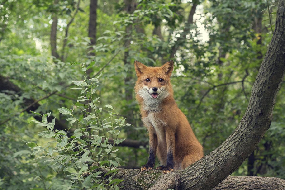 Лесной охотник - Алексей Соминский