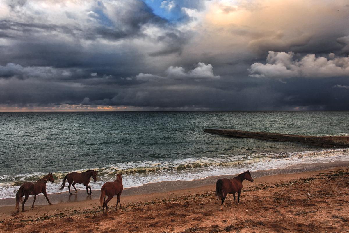 Кони и море - Виктор Мороз