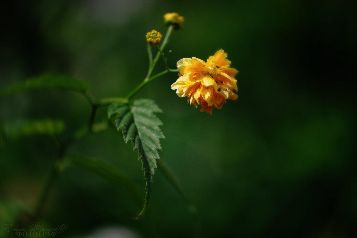 когда у мамы в огороде) - Евгений Ромащенко