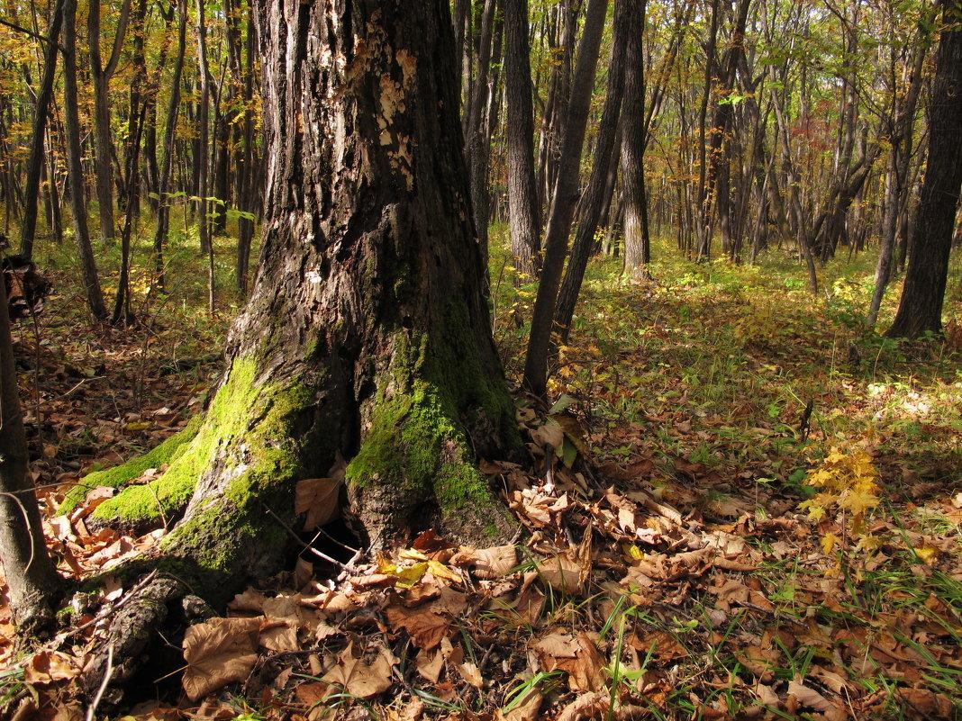 Лес осенний - эля файдель