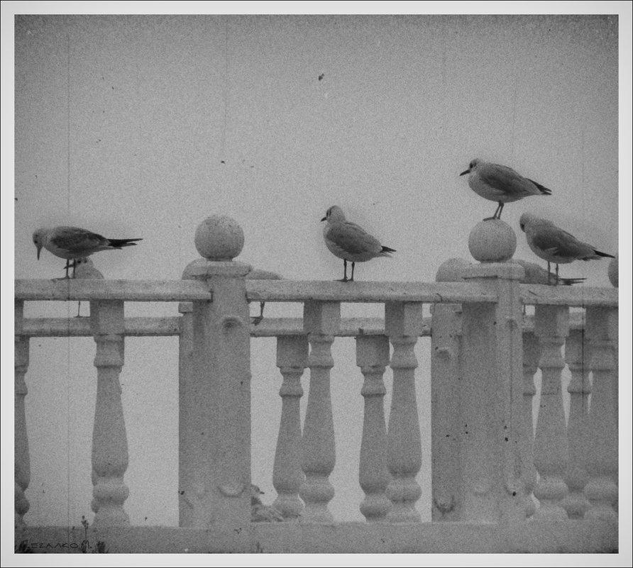 Чайки - Михаил Цегалко