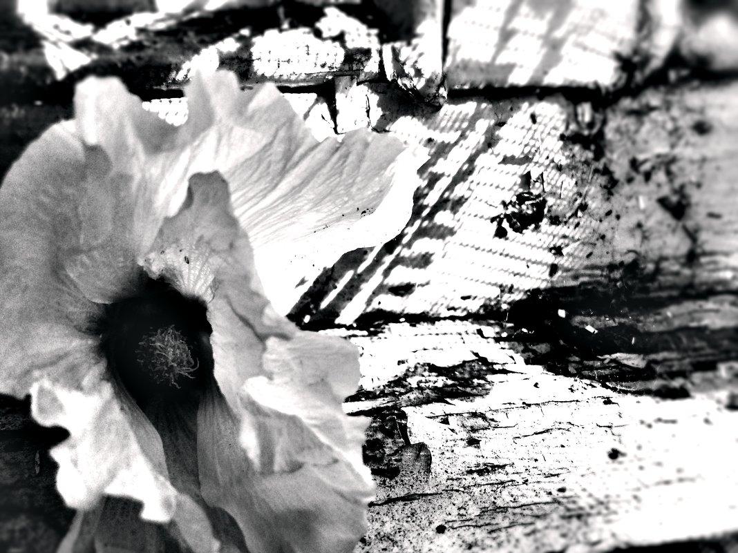 In a half-forgotten dream - Валерия Климченко