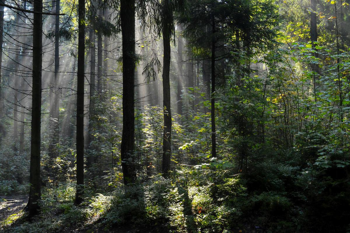 Утро в лесу.... - Юрий Цыплятников