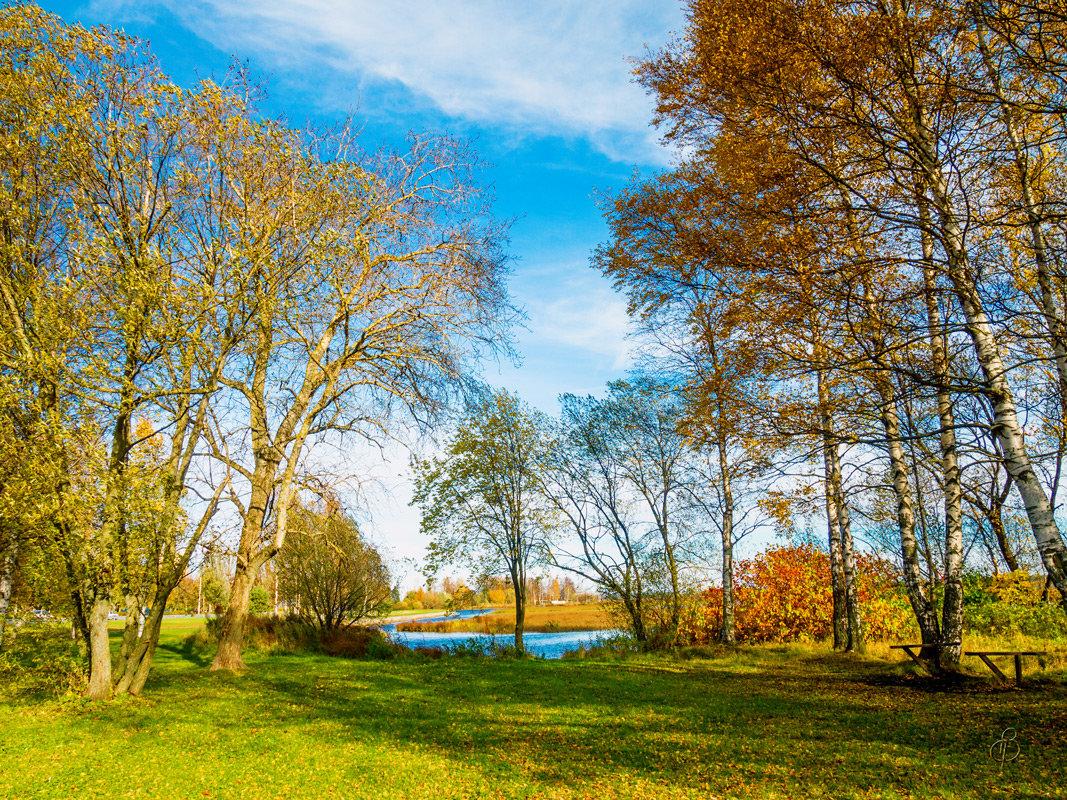 На берегу озера Разлив 5 - Виталий