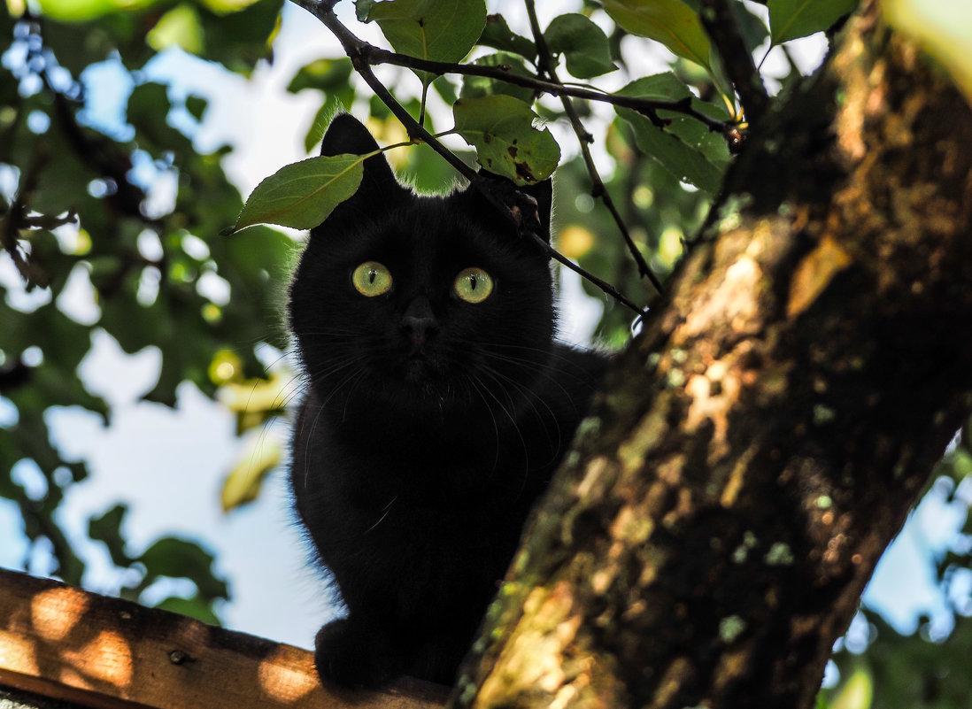 Тише мыши - кот на крыше ))) - Андрей Зайцев