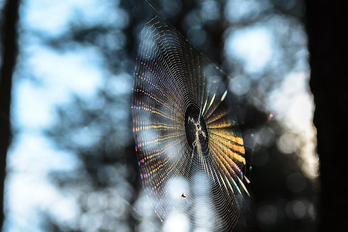 Солнце в паутине - Валерий Чернов