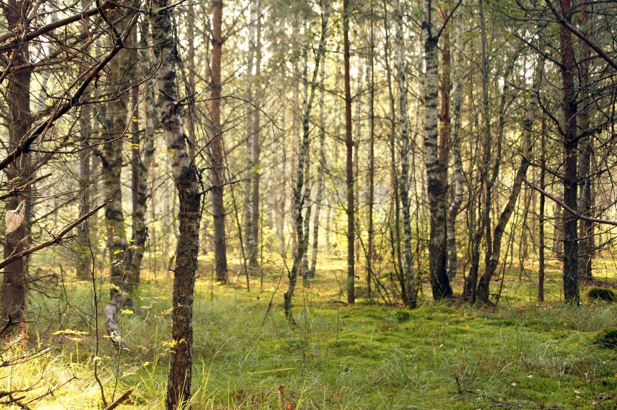 утренний лес - Кристина Плавская