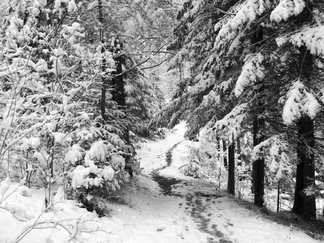 Снежная тропа - Сергей Добрыднев