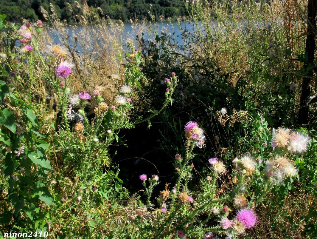 На берегу водохранилища - Нина Бутко