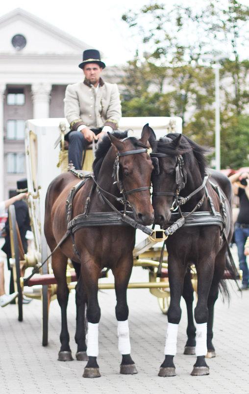 День города Минска Любовь лошадей ) - Светлана З