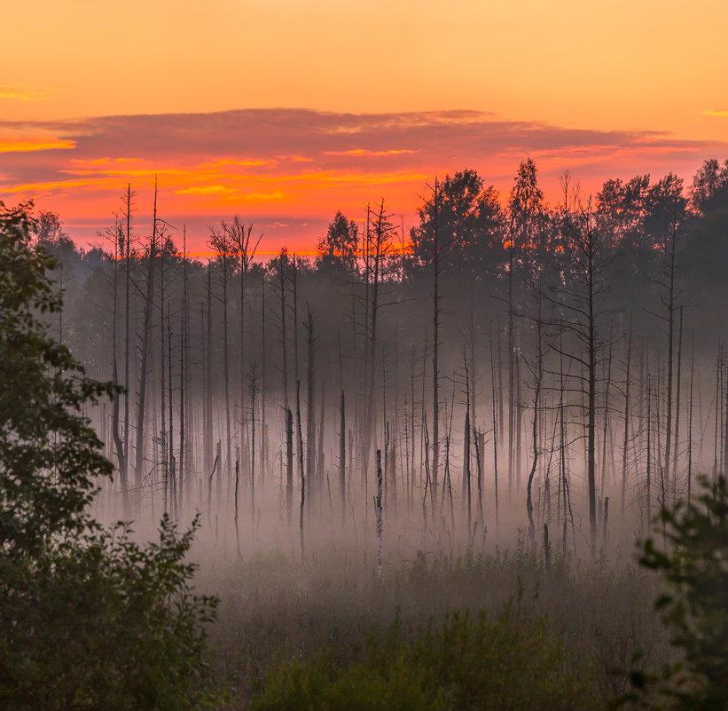 Лес на болоте - Фёдор. Лашков