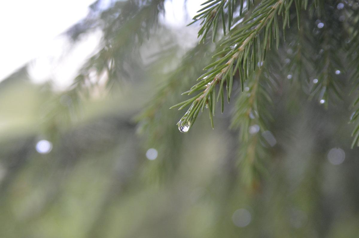 В дождь - Ольга