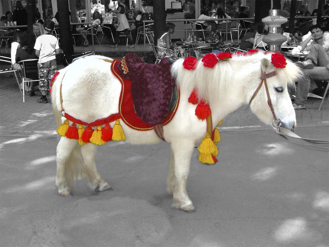 А пони - тоже кони - Elena