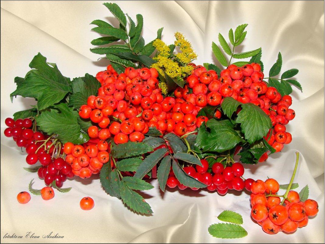 Осенняя палитра - °•●Елена●•° Аникина♀