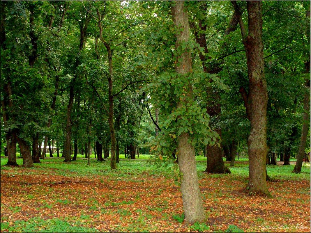 В парк крадётся осень... - °•●Елена●•° Аникина♀