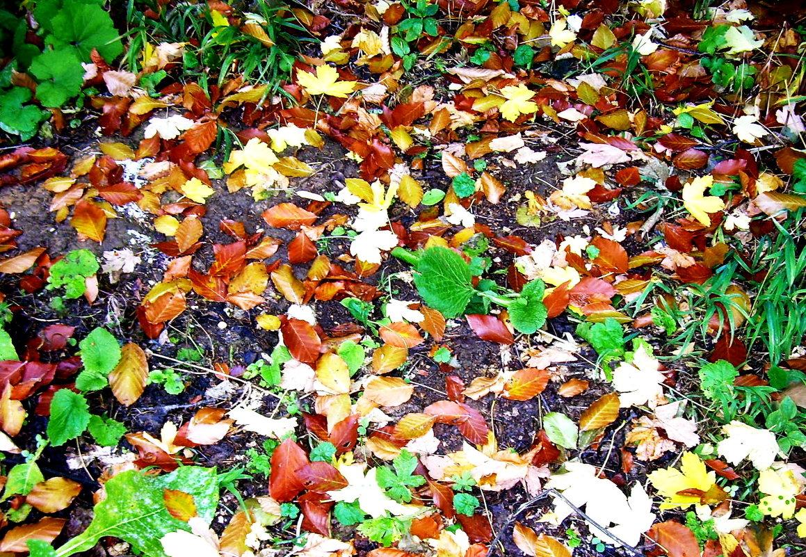 Осенний ковер - татьяна
