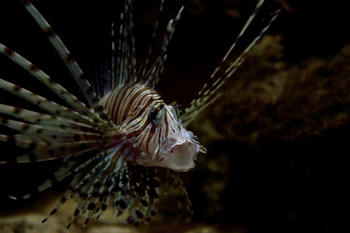 Морской тигр - Александр (Алчи) Шерстнёв