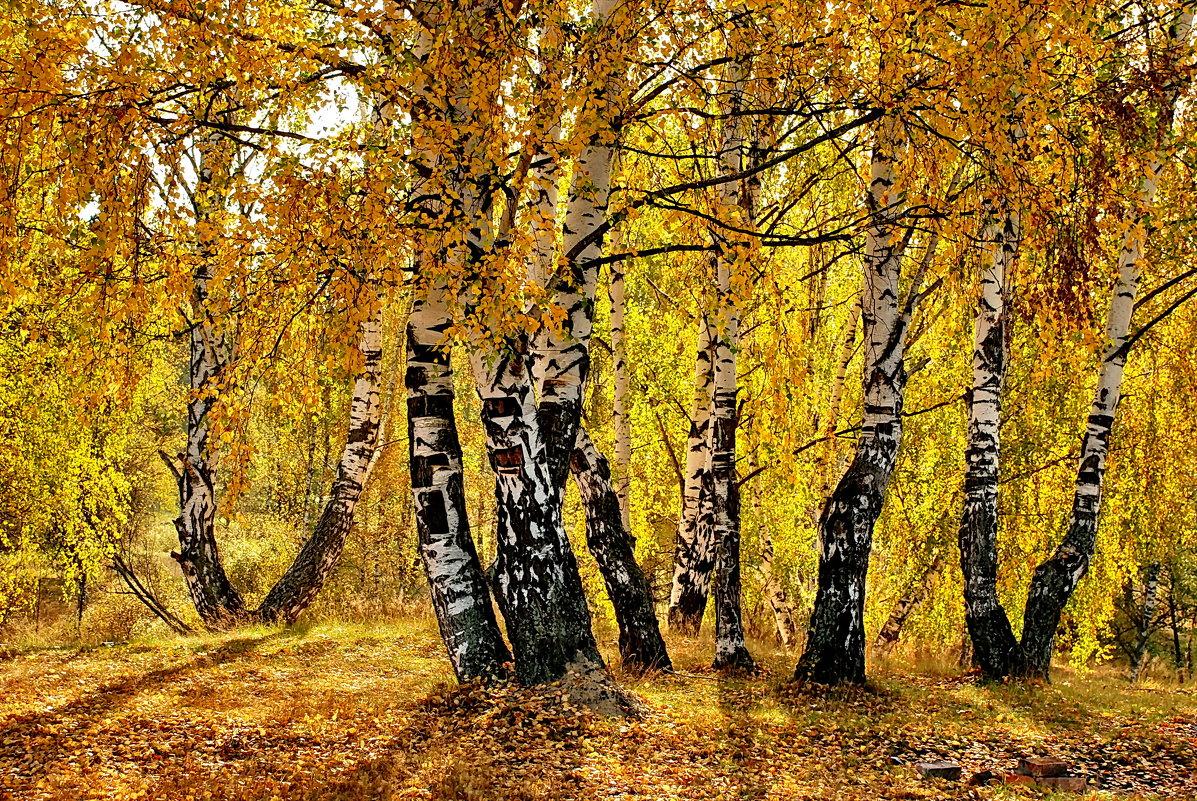 Осенний этюд у деревни Сивцево - Валерий Толмачев