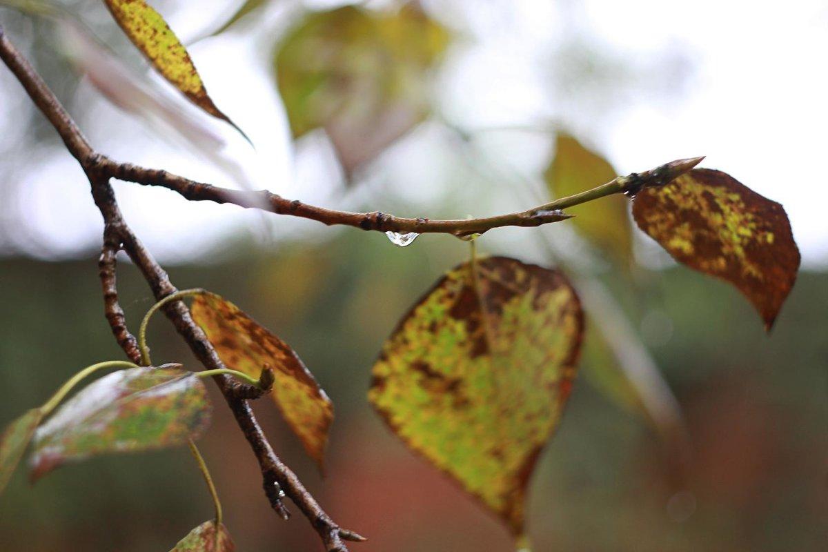 Осень. Дождь. Листья. - Татьяна Петрова