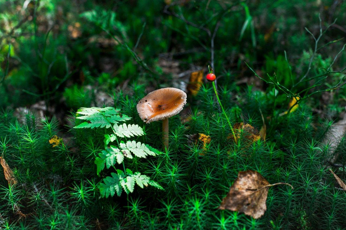 Лесной натюрморт - Андрей Куприянов
