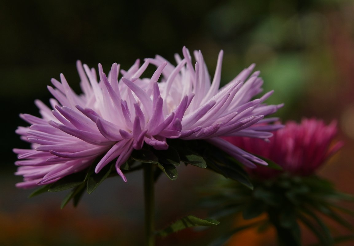 городские цветы - Юрий Оржеховский
