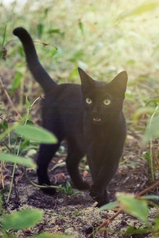 черный кот 2 - Дмитрий Барабанщиков