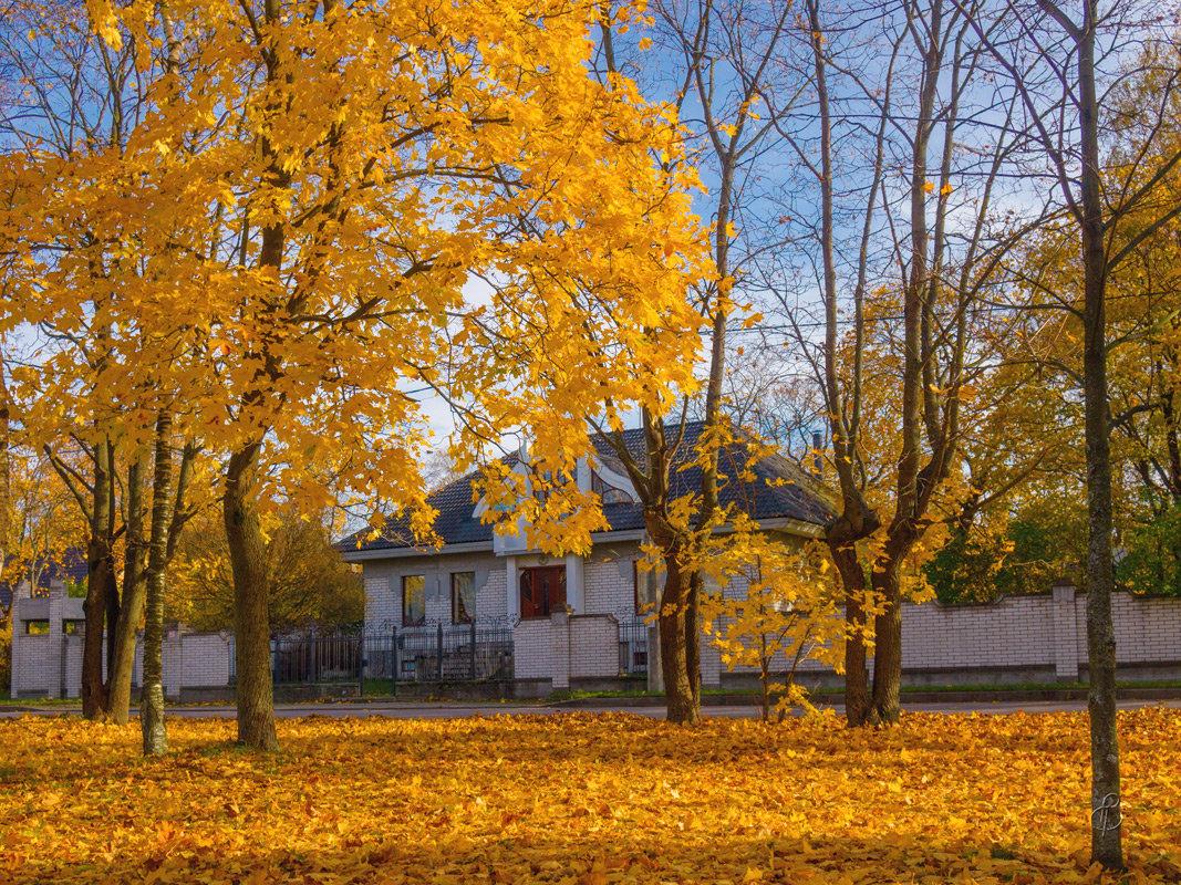 Осень в квартале ИЖС - Виталий