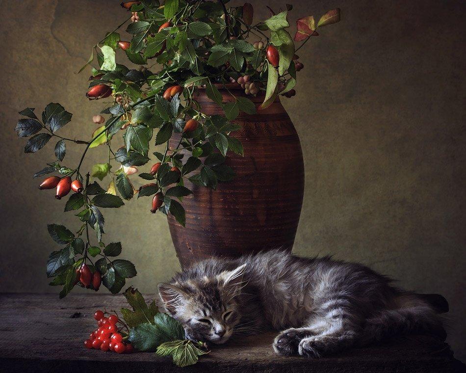 Спящий осенний подарок - Ирина Приходько