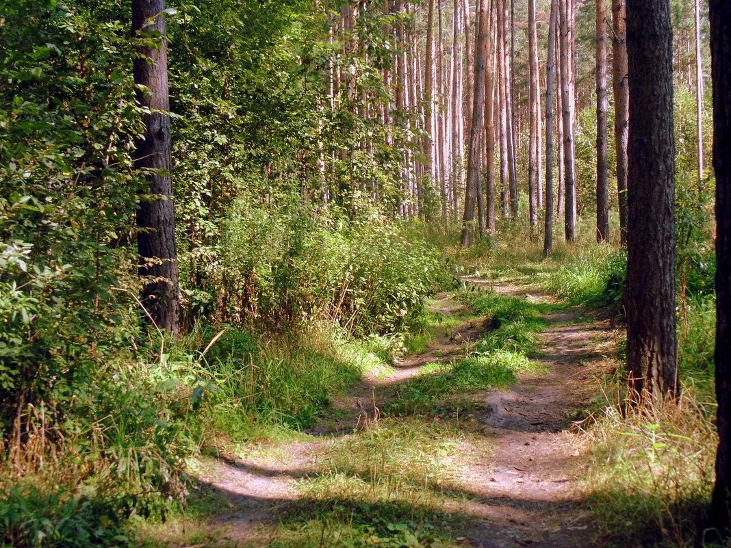 Прогулка по лесной дороге ... - Мила Бовкун
