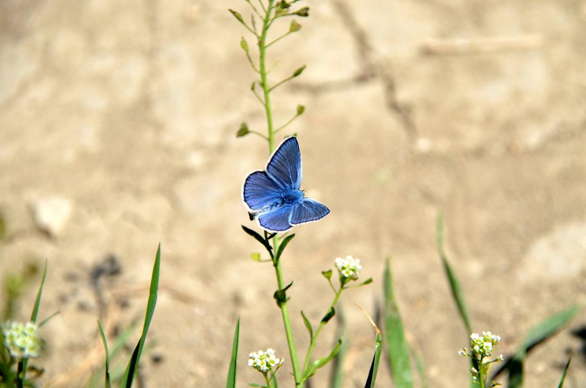 Бабочка из бабьего лета - Ольга Голубева