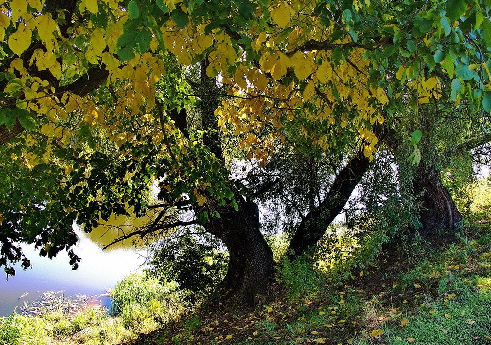 Зазолотилась первая листва... - Лесо-Вед (Баранов)