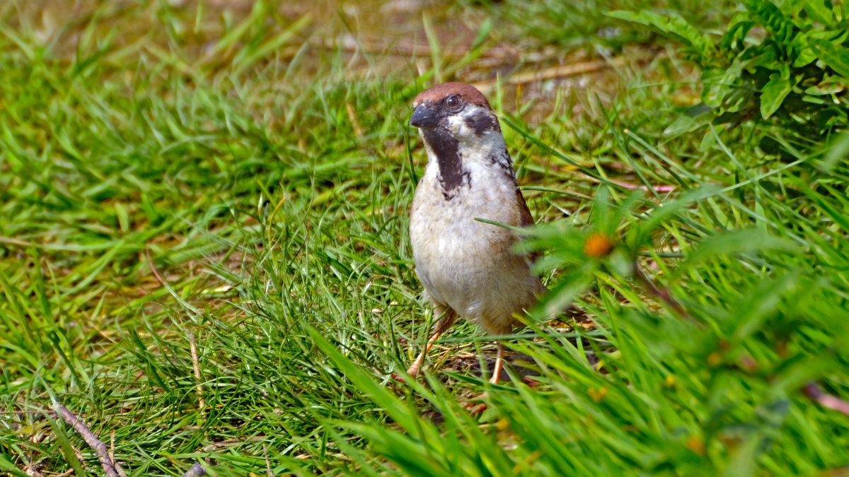 полевой - linnud