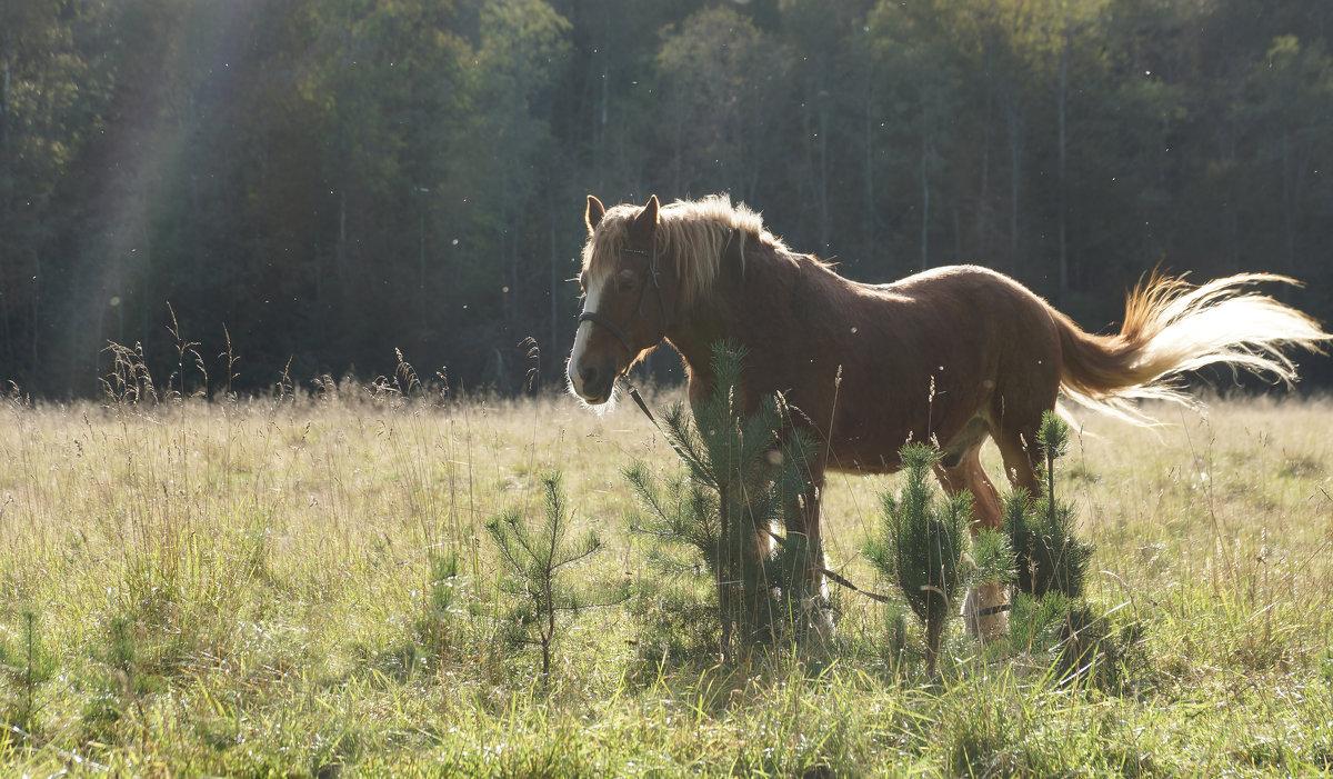 Старый конь - Валерия заноска