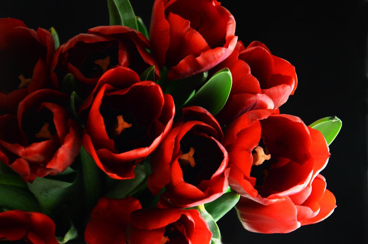 Букет алых тюльпанов - Татьяна