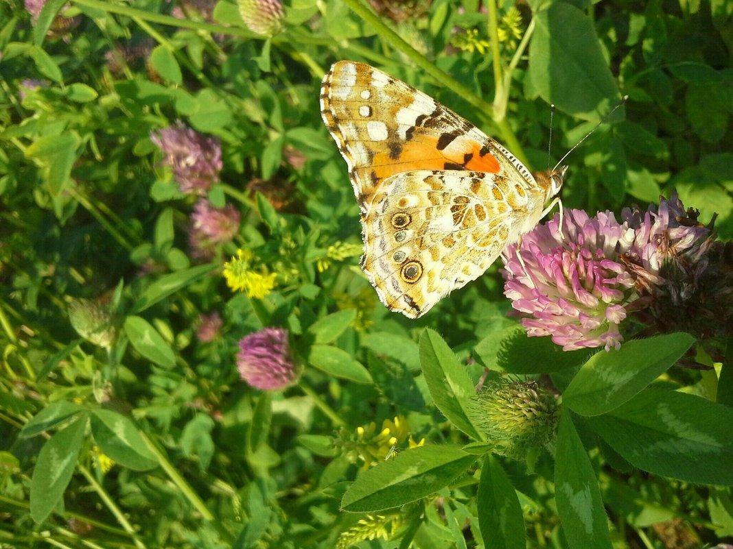 бабочка - Дарья