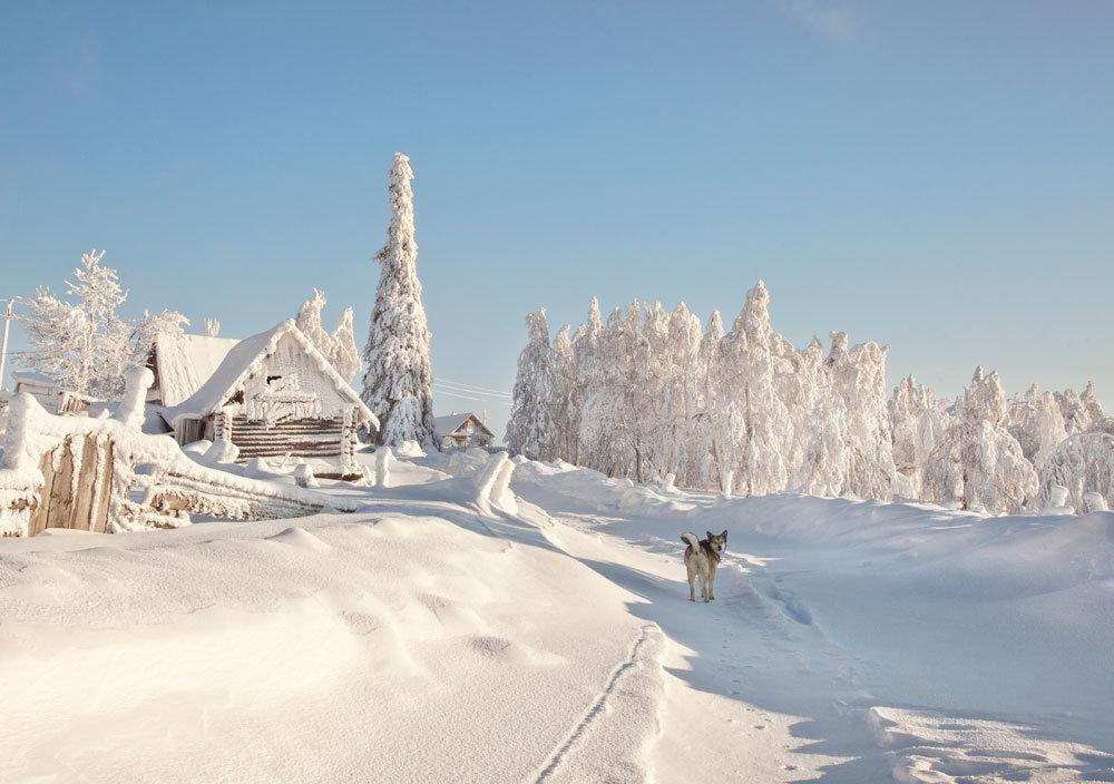 Морозный день - Тамара Андреева